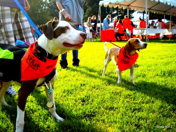 Strut Your Mutt 2012 (4)